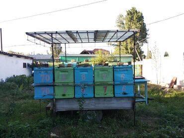в Кемин: Продаю пчел 10 ульев ппу 10 семей на легковом прицепе есть все