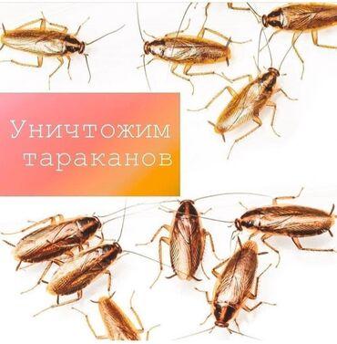 стол для гостиной в Кыргызстан: Дезинфекция, дезинсекция   Клопы, Тараканы   Квартиры, Дома