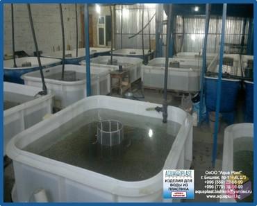 Рыбные хозяйства набирают все больший в Ош
