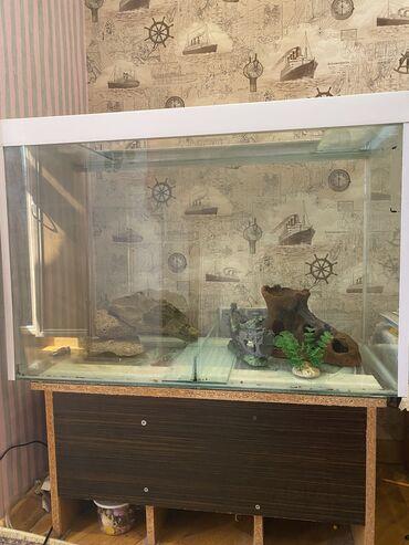 kök qadınlar üçün bədən yığan alt paltarları - Azərbaycan: Akvarium.  Hündürlüyü- 60sm, eni-40sm, uzunluğu-90sm Tutumu 180litr