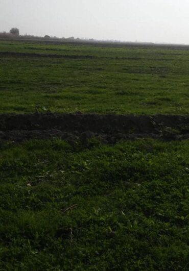 Zavod və fabriklərin satışı - Azərbaycan: Beylaqanda 24 hektar yer var ıcınde 4 dene ferma var ıcınde de 350 mın