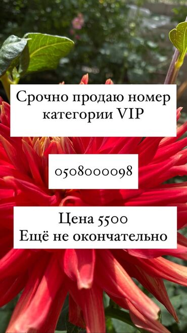 vip девушка бишкек в Кыргызстан: Срооочно продаю VIP номер