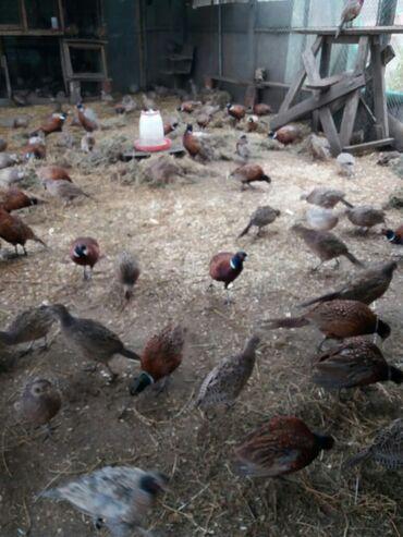 Животные - Имишли: Птицы