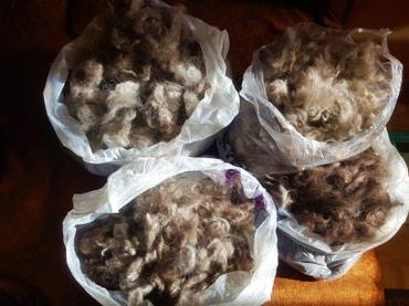 Продаю собачью шерсть (подшерсток, в Бишкек