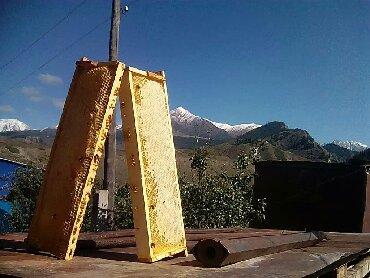 Продукты питания - Кыргызстан: Мёд горный экспарцет крем мёд фильтрованный .Перга Пыльца