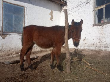 С/х животные в Кемин