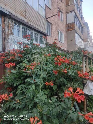 квартира токмок микрорайон in Кыргызстан   ПРОДАЖА КВАРТИР: 3 комнаты, 68 кв. м С мебелью