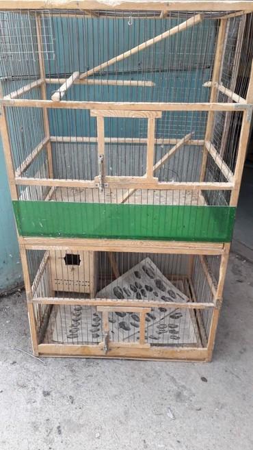 вольер для щенков в Кыргызстан: Клетка-вольер для крупных попугаев таких как кореллы, розеллы