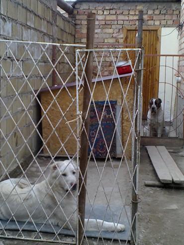 Продаю большую будку,для крупной в Бишкек
