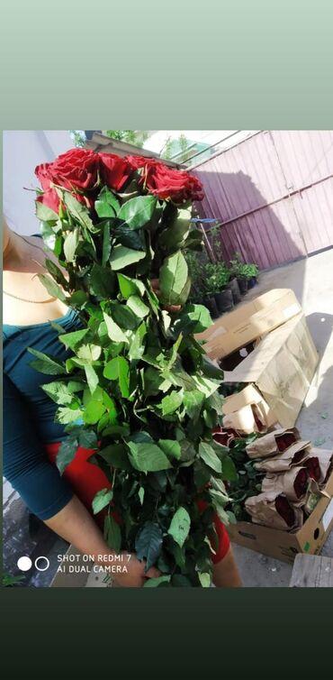 chevrolet 70 в Кыргызстан: Цветы БишкекГербера АльстермерияБукеты11По разным ценамРозы 50 см60