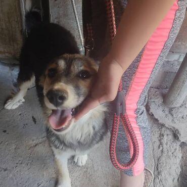 Отдам собаку с отличным характером в любящие, ответственные руки  Возр