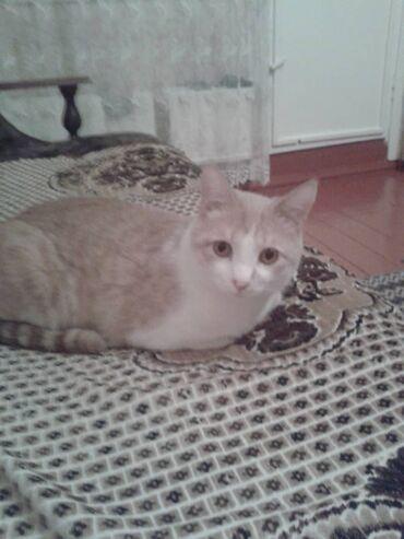 Красивый рыжий котик Тимофей. 8мес. очень ищет добрый любящий