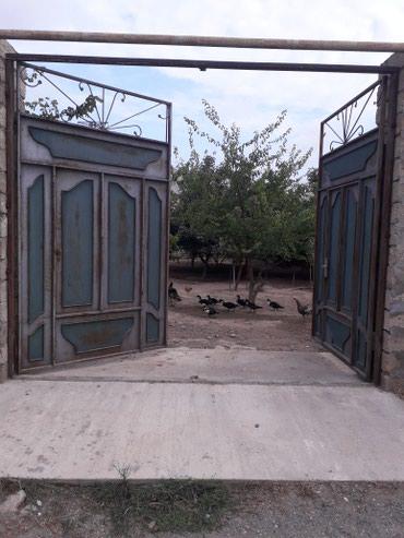Bakı şəhərində Yeni suraxanida 104 nomreli afdobusun axirinci asdonofkasinda kupcali