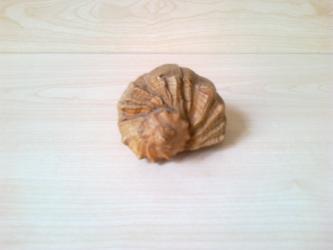 Другие предметы коллекционирования в Азербайджан: Коллекционная Рапана . Большая