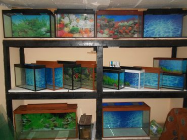 Bakı şəhərində Akvariumlar baliqlar avadanliqlar