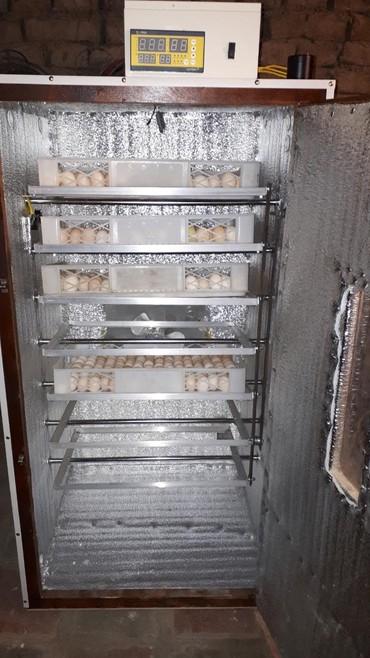 Inkubator aparati tutumu 1000 yumurtaliq. elde 2 eded var. Tam