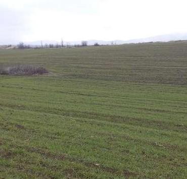 Аренда земельных участков в Азербайджан: Аренда 300 соток Для сельского хозяйства от собственника