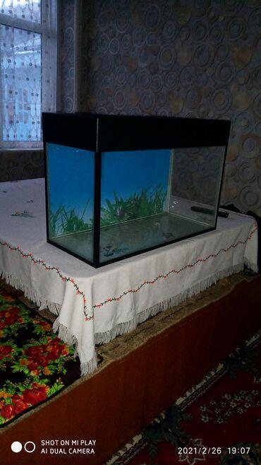 Животные - Ош: Аквариум 100л заводская крышка . Толщина стекла 8. 6. Мм в оше рыбки