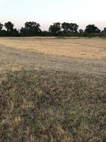 земельные участки семьям в Азербайджан: Продажа 100 соток Для сельского хозяйства от собственника