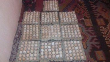 Xırdalan şəhərində Kend yumurtalari minumum satis 500 eded. % mayalı.