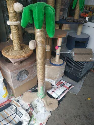 переноска для кошек бишкек in Кыргызстан | ЗООТОВАРЫ: Продаются домики для кошек. Красиво,функционально и не дорого!!
