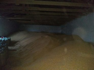Турецкий товар - Кыргызстан: Продаю кукурузу рушеную, сорт турецкий. самовывоз  с. Беловодское