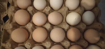 Ev yumurtasi 30 qepik