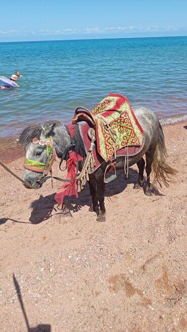 6 объявлений | ЖИВОТНЫЕ: Лошади, кони