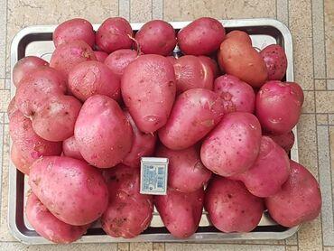 манго фрукт цена бишкек в Кыргызстан: Продаётся картофель сорта Алладин (С ПОЛЯ)Цвет кожуры: красныйЦвет