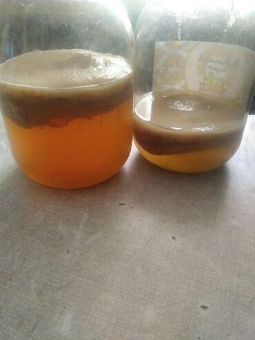 jelitnyj zelenyj kofe в Кыргызстан: Продаю чайные грибы
