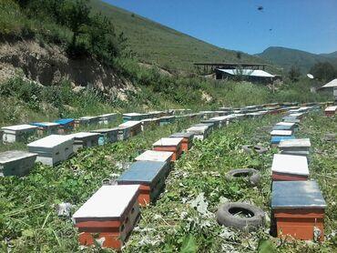 22 объявлений: Натуральный горный мёд