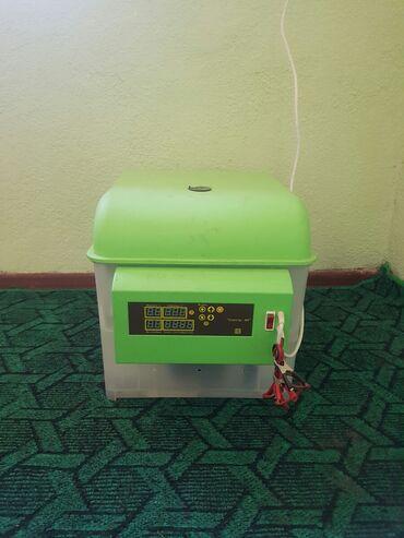 Другая бытовая техника в Кара-Балта: Инкубатор спек 84 свем желаюшим приобристи 8000с