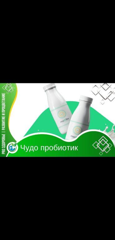 акустические системы qitech мощные в Кыргызстан: МаксилинАцидофильные бактерии Lactobacillus acidophilus живут в тонком