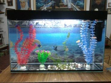 Продаю аквариум 40 - литровый.  есть в Бишкек