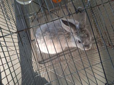 526 объявлений: Декоративный кролик минор 4 месяца