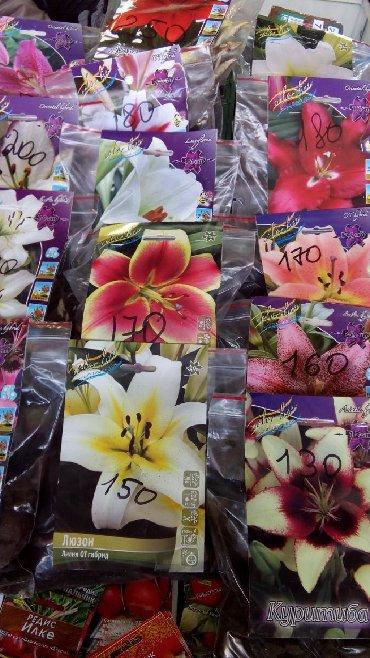 уличный фонарь польша в Кыргызстан: Сезонная Распродажа!!! Лилии, Бегонии, Глоксинии, Фрезии, Гладиолусы