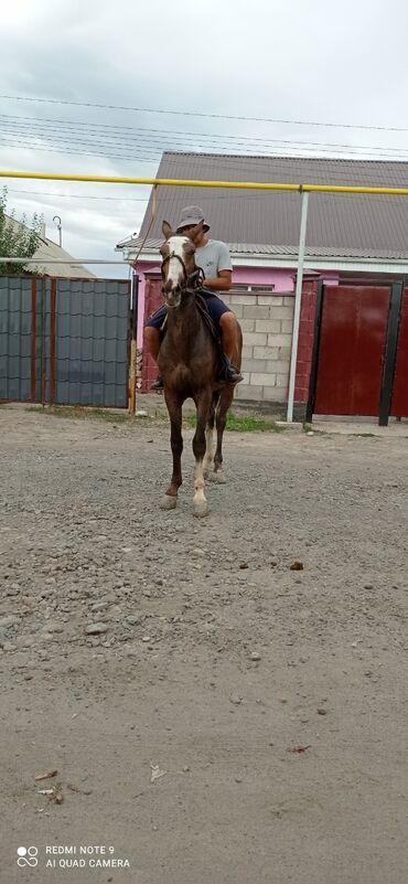 Животные - Гавриловка: Лошади, кони