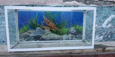 Продаю аквариум на 50 литров