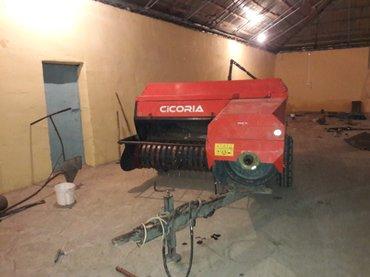 Ağstafa şəhərində Cicoria presi cox keyfyetidi