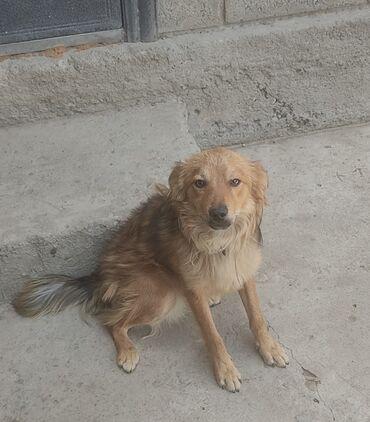 Животные - Шопоков: Отдам щенка в добрые руки. Возраст 4 мес. (кобель). Находится в г