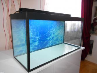 Bakı şəhərində 100 litrelik teze akvarium  wekildeki wuwesinin qalinliqi 6mmluzunu 8