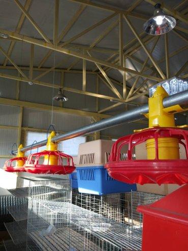 Систем для кормления птиц на 10000 голов, автомат, ул. гагарина 39 в Бишкек