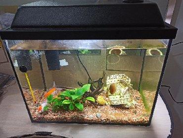 Аквариумы - Лебединовка: На 30литров с рыбками
