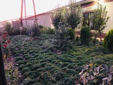 Семена и уличные растения - Сокулук: Газон
