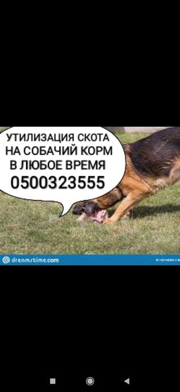 купить ауди а 4 в Кыргызстан: Заберу собакам