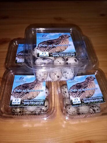 Jaja - Srbija: Japanse prepelice na prodaju stare od 15 do20 dana cena po komadu je 1