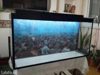 Bakı şəhərində Teze akvarium endirim qiymete 125litre
