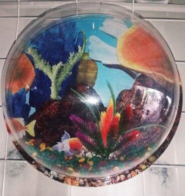 Продается красивый настенный мини акриловый аквариум. Не занимает