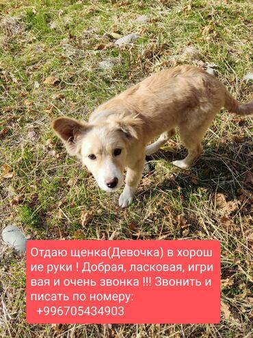 88 объявлений   ЖИВОТНЫЕ: Собаки