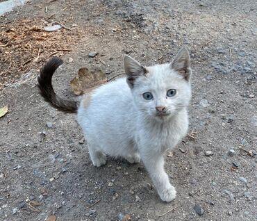 194 объявлений | ЖИВОТНЫЕ: Фонд помощи Животным Добрые руки, ищет добрые руки для котят. Светлая